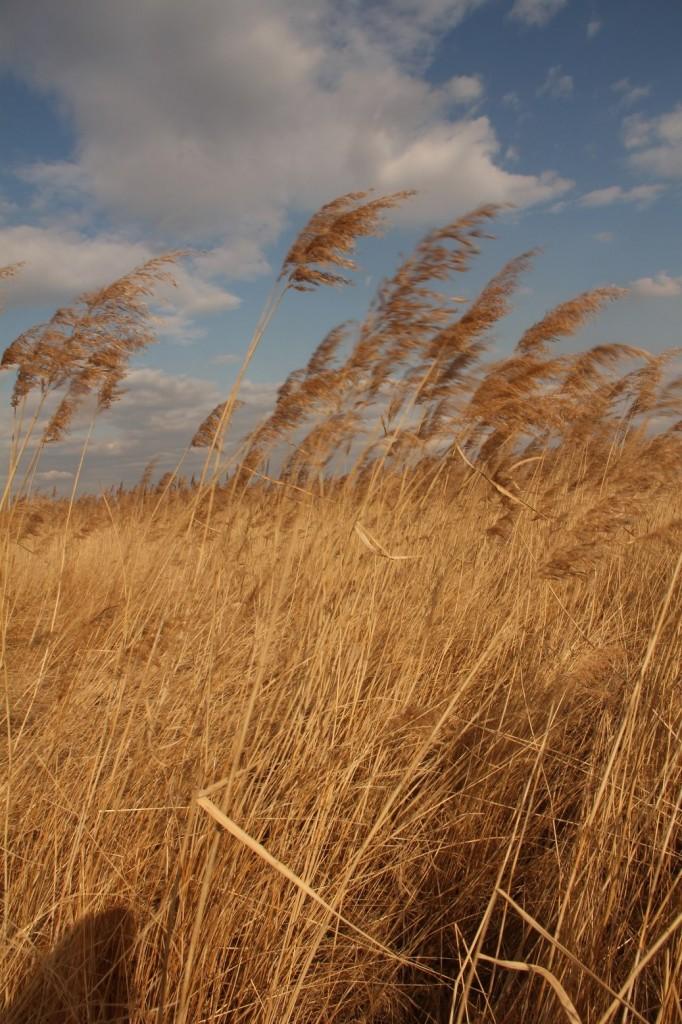 Le vent...