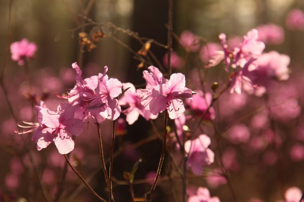 Le printemps arrive!