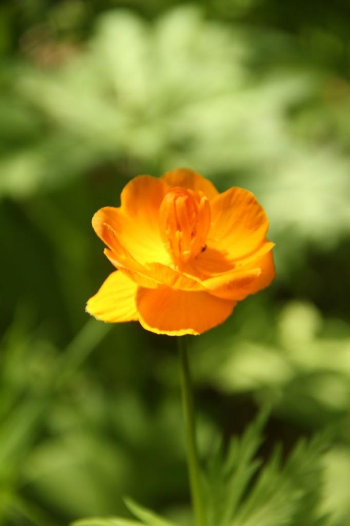 La flore me souhaite la bienvenu dans le coin