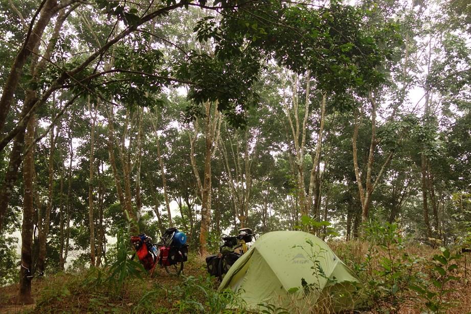 Campement dans les forêts d'hévéas