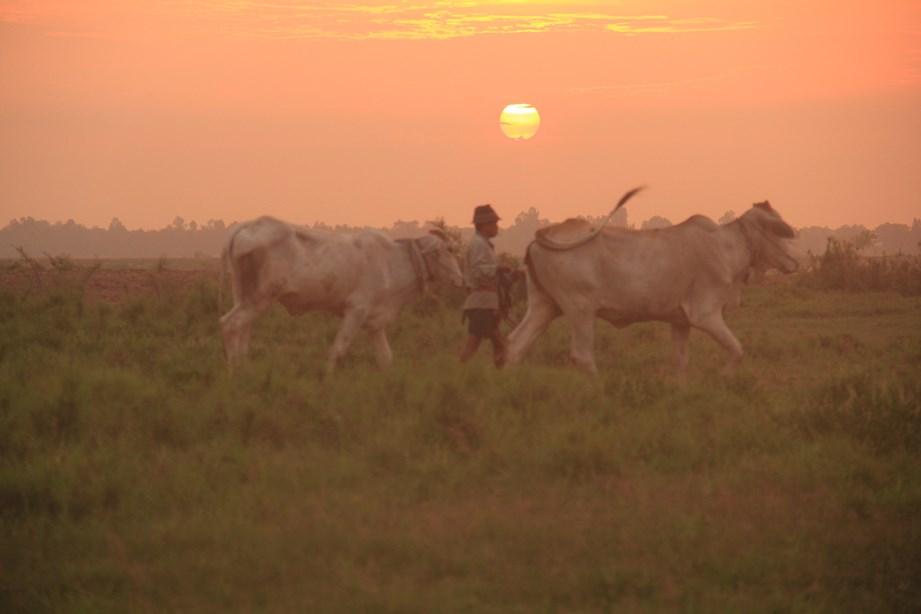 Les bergers de ces grandes vaches viennent me dire bonjour au réveil