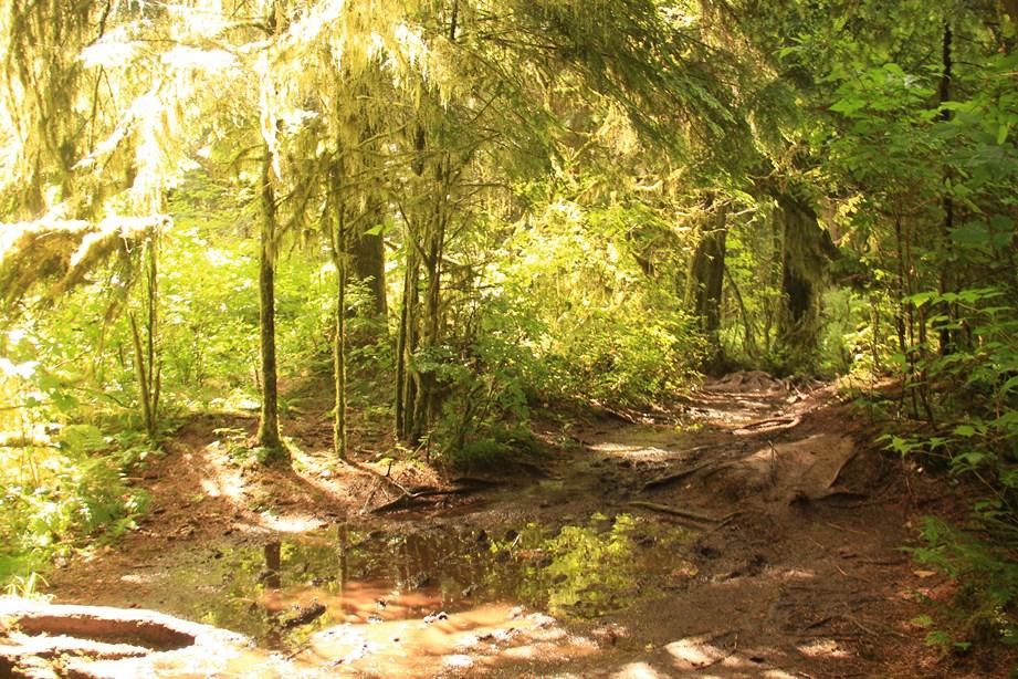 Presque au centre de Vancouver Nord, Le lynn Valley Park avec sa forêt luxuriante et son silence loin des bruits de la ville
