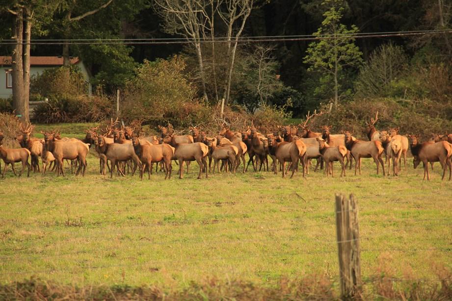 Et quelques instants plus tard, un troupeau traverse la route devant mon nez!