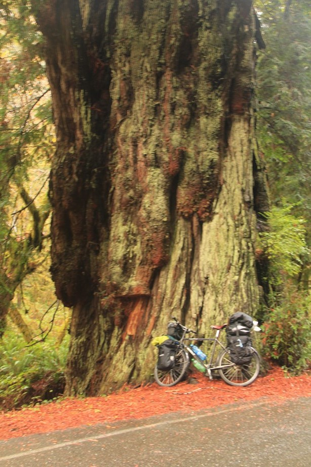 Pale-Ipa, petit vélo au pied d'un géant