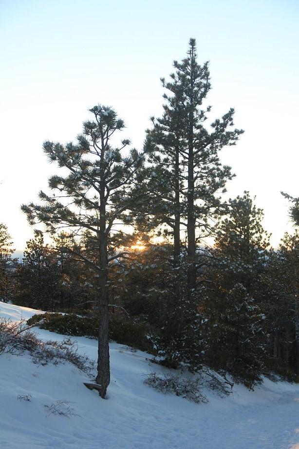 Et le matin, au premier rayon du soleil, tout va mieux