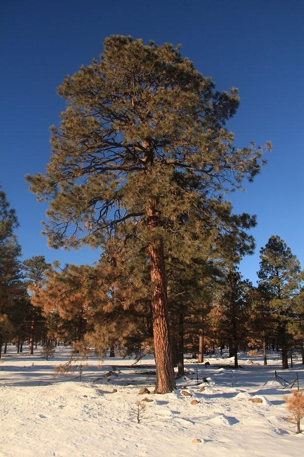 ça fait du bien de voir de grands arbres