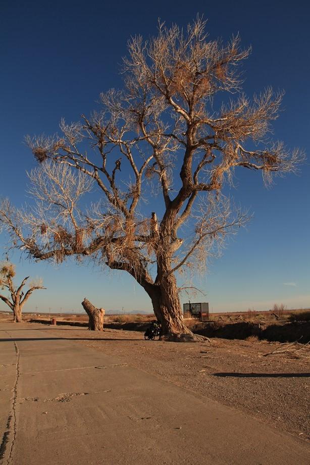 et le seul arbre de tout l'Ouest