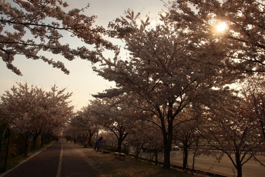 Corée du Sud, la fin d'un voyage